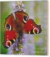 Closeup Of An European Peacock Butterfly Wood Print