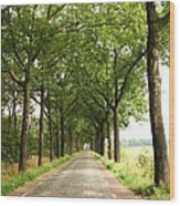 Cobblestone Country Road Wood Print by Carol Groenen