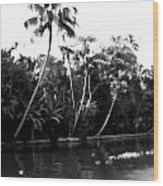 Coconut Trees And Other Plants In A Creek Wood Print