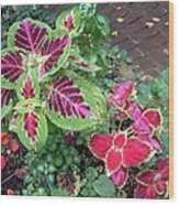 Coleus Excitement Wood Print