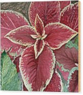Coleus  Wood Print