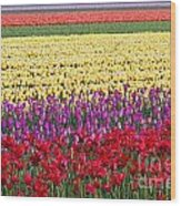 Colors Of Holland Wood Print by Lars Ruecker