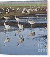 Common Crane Grus Grus Wood Print