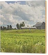 Corn Growing In Maine Farm Field Wood Print