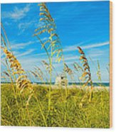 Crandon Park Beach Wood Print