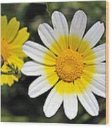 Crown Daisy Flower Wood Print by George Atsametakis