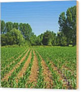 Cultivated Land Wood Print