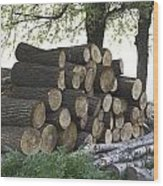Cut Tree Trunks Piled Up For Further Processing After Logging Wood Print