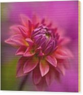 Dahlia Burst Wood Print