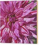 Dahlia Named Annette C Wood Print