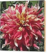 Dahlia Named Bodacious Wood Print