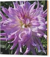 Dahlia Named Mingus Randy Wood Print