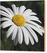 Daisy In The Garden Wood Print