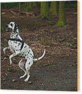 Dalmatian 5 Wood Print