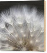 Dandelion Backlit Close Up Wood Print