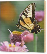 Delicate Wings Wood Print by Bill Cannon