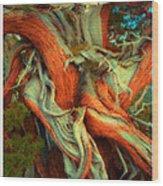 Deranged Redwood Wood Print