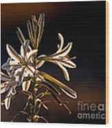 Desert Easter Lily Wood Print by Robert Bales