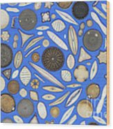 Diatoms Wood Print by Kent Wood