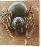 Dictynid Spider Wood Print by David M. Phillips