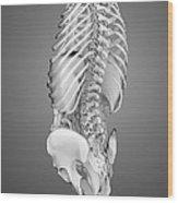 Digestive System And Bones Wood Print