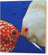 Discus Fish Wood Print