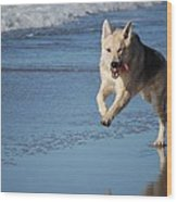 Dog On Beach Wood Print