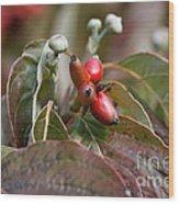 Dogwood  Berries Wood Print