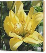 Double Asiatic Lily Named Fata Morgana Wood Print