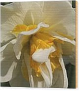 Double Daffodil Named White Lion Wood Print