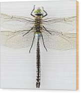 Dragonfly Isolated Wood Print