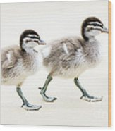 Ducklings Wood Print