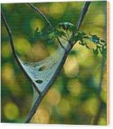 Early Fall Net Wood Print