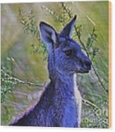 Eastern Grey Kangaroo Wood Print