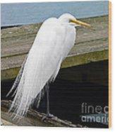 Elegant Egret Wood Print