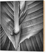 Embraced Wood Print