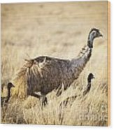Emu Chicks Wood Print by Tim Hester
