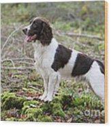 English Springer Spaniel Dog Wood Print