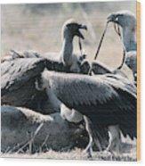 Eurasian Griffon Vulture Gyps Fulvus Wood Print