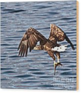 European Fishing Sea Eagle 4 Wood Print