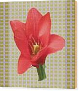 Exotic Red Tulip In Bold And Two Border Patterns Tiny Sparkle Parallal Horizontal Strips Summer Flow Wood Print