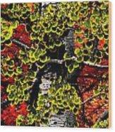 Fall Birch Leaves  Wood Print