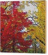 Fall Leaves Wood Print by Ariane Moshayedi