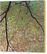 Fall Tree Wood Print