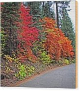 Fall's Splendor Wood Print