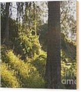 Fantasy Forest Wood Print
