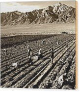 Farm Workers And Mt Williamson 1940s Wood Print