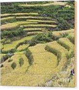 Farmers At Rice Field Wood Print
