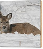 Fawn In The Snow Wood Print