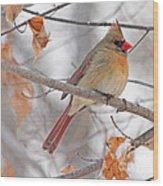 Female Cardinal In Winter Wood Print